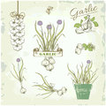 Garlic vegetables herb plant vintage background packaging product Royalty Free Stock Images