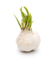 Garlic white background clipping path Stock Images