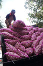 Garlic workers unload in solo central java indonesia Royalty Free Stock Photo