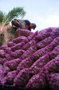Garlic workers unload in solo central java indonesia Stock Image