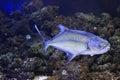 Garrick Fish
