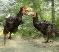 Gastornis Fighting (Terror Birds)