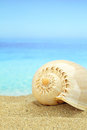 Gastropod shell Royalty Free Stock Photo