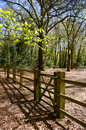 Gate and fence in forest setting perspective shot of a a Stock Photos