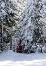 Gate in a snow woods Stock Photos