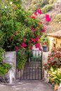Pink bougainvillea flowers on the spanish gate Royalty Free Stock Photo