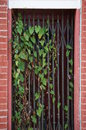 Gated door way with vines a doorway blocks this entrance Stock Photo