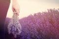Gathering a bouquet of lavender. Girl hand holding a bouquet of fresh lavender in lavender field. Sun, sun haze, glare. Royalty Free Stock Photo