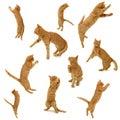 Gatitos en la acción Imágenes de archivo libres de regalías
