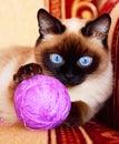 Gato con la bola roja Fotos de archivo libres de regalías