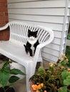 Gato del smoking Imagen de archivo