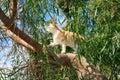 Gato en el árbol Imagenes de archivo