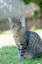 Gato en la hierba verde que disfruta de la tarde asoleada. Imágenes de archivo libres de regalías