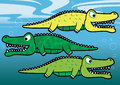 Gators vector illustration of alligators and crocodiles underwater Royalty Free Stock Photo