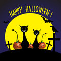 Gatos assustadores de Halloween Fotos de Stock Royalty Free
