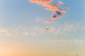 Gaviota en el aire Foto de archivo