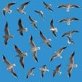 Gaviota fijada - pájaros Imagen de archivo libre de regalías