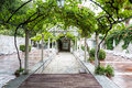 Gazebo a with grapevines growing over it Stock Photography