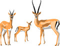 Gazelle grant family color illustration Stock Photo