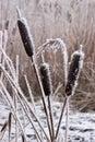 Geada do Hoar ou rime macio em plantas em um dia de inverno Fotografia de Stock Royalty Free