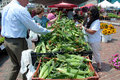 Gebürtige Maiskörner am Markt des Landwirts Stockbilder