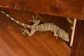 Gecko climbing on wooden Royalty Free Stock Photo