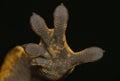 Photo : Gecko hand sea  trees