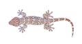 Gecko isolated on white background. Royalty Free Stock Photo