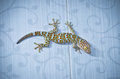 Gecko with knobby skin perched on the wall Royalty Free Stock Photos