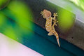 Gecko laying on the dark roof with green wall and green bokeh background. Royalty Free Stock Photo