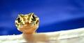 Gecko Peeking Over Royalty Free Stock Photo