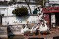 Geese bask in the sun in the ancient fountains historical indian estates Stock Photos