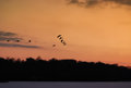Geese in flight Royalty Free Stock Photo