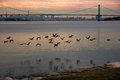 Geese flying with Bronx-Whitestone Bridge and Manhattan in the background Royalty Free Stock Photo