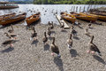 Geese and Rowing boats on shore of Derwent Water, Keswick. Royalty Free Stock Photo