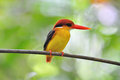 Gelber schwarzer und roter Vogel (Schwarzes unterstützter Eisvogel Lizenzfreie Stockbilder