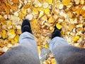 Gelbes blatt auf baumhintergrund Stockfotos