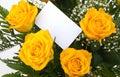 Gele rozen 1 Stock Foto's