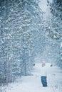 Gelukkige leuke vrouw in forest enjoying winter Royalty-vrije Stock Foto