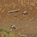 Gemsbok (Oryx) in Namibia Stock Photos
