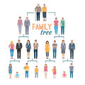 Genealogy Tree Illustration Royalty Free Stock Photo