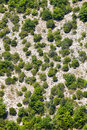 Generic mountain vegetation. Aerial view. Trees and terrain. Royalty Free Stock Photo