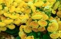 Generic vegetation Royalty Free Stock Photo