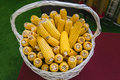 Genetically modified corn in basket at agricultural exhibition, top view