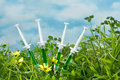 Genetically modified four syringes in grass as a symbol for dna and biotechnology Stock Photo