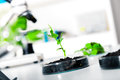 Genetically modified plant tested in petri dish ecology laboratory Royalty Free Stock Images