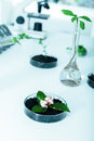 Genetically modified plant tested in petri dish ecology laboratory Stock Photos