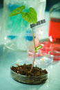 Genetically modified plants Stock Photos