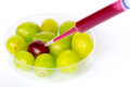 Genetically modifing grapes gmo are living organisms whose genetic material has been altered to enhance some qualities over others Stock Images