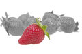 Genetically strawberry concept Royalty Free Stock Photo